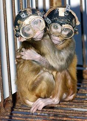 macacos-testes-oculos-china