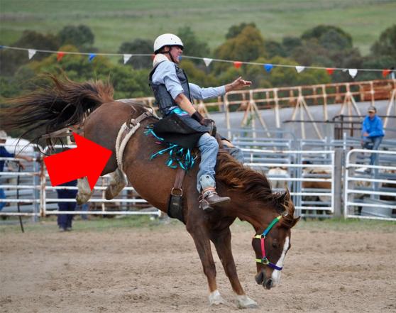 sedem foto dp horse