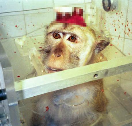malish macaco testes em animais