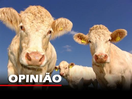 vacas foto opiniao copy