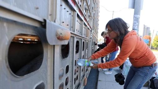 ativista porco agua