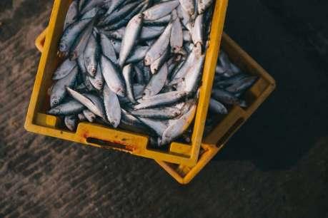 peixes foto