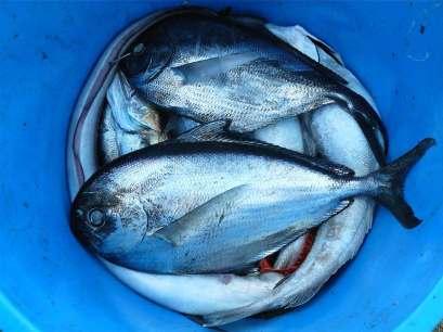 peixes pesca foto 03