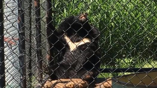 urso zoologico