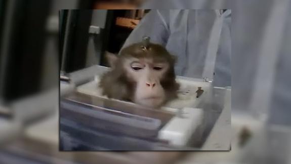 macaco Lumpi MPI investigacao buav