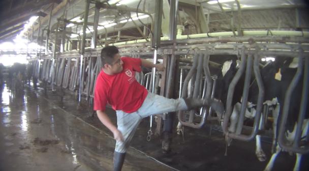 larson industria do leite crueldade 01