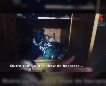 Cães foram encontrados dentro do armário (Imagem: Reprodução/Instagram/Luisa Mell)
