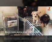 Cães estavam confinados em gaiolas e caixas (Imagem: Reprodução/Instagram/Luisa Mell)