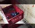 Filhotes em caixas (Imagem: Reprodução/Instagram/Luisa Mell)